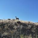 Raod Trip 2: Idaho