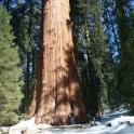 Raod trip : Part 3 >> Sequoia