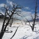 2008-10-Yellowstone-04.JPG