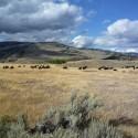 2008-10-Yellowstone-06.JPG