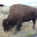 2008-10-Yellowstone-07.JPG