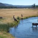 2008-10-Yellowstone-18.JPG